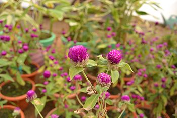 Purple Flower Plant.jpg