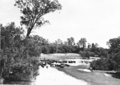 Queensland State Archives 1670 Cattle at Wivenhoe Crossing Fernvale Upper Brisbane River 1945.png