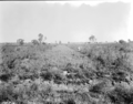 Queensland State Archives 1817 Irrigated pasture experiment Regional Experiment Station Ayr November 1955.png