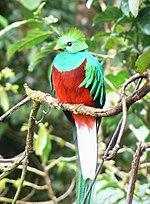 Image of: Legendary Extinct Haiti Wikipedia List Of National Animals Wikipedia
