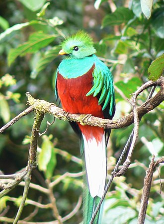 "Q'uq'umatz - The q'uq ""resplendent quetzal"" was strongly associated with Q'uq'umatz in K'iche' belief"