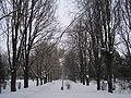RO BH Salonta Alee parc.JPG