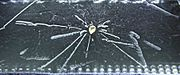 Radioactivity of a Thorite mineral seen in a cloud chamber.jpg
