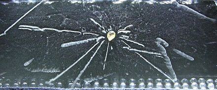 Radioactivity of a Thorite mineral seen in a cloud chamber