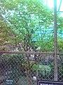 Rani Baugh Bombay (Jijamata Udyan Mumbai) - panoramio - Camaal Mustafa Sikan… (11).jpg