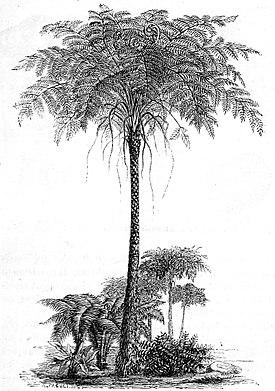 Reconstruction of Psaronius.jpg