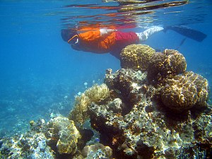Snorkeling - A snorkeler amid corals on a coral reef near Fiji