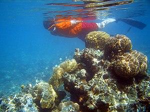 facendo snorkeling a fiji