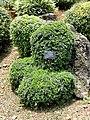 Rhamnus gilgiana - Kunming Botanical Garden - DSC03037.JPG