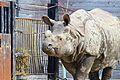 Rino at Toronto Zoo.JPG