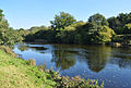 River Dart at Dartington.jpg