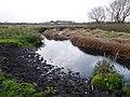 River Soar from Wanlip Meadows 2.jpg