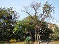 RizalParkjf8110 09.JPG