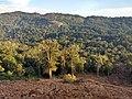Roadside Landslip in Vazachal Forest, Anaimalai hills IMG 20180909 175127537 HDR.jpg