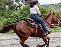 Rodeo in Panama 42.jpg