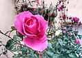 Roses on top!.jpg