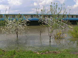 2006 European floods - Trees in Rousse, Bulgaria show the rise of water level