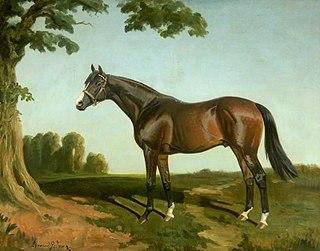 Royal Lancer British-bred Thoroughbred racehorse