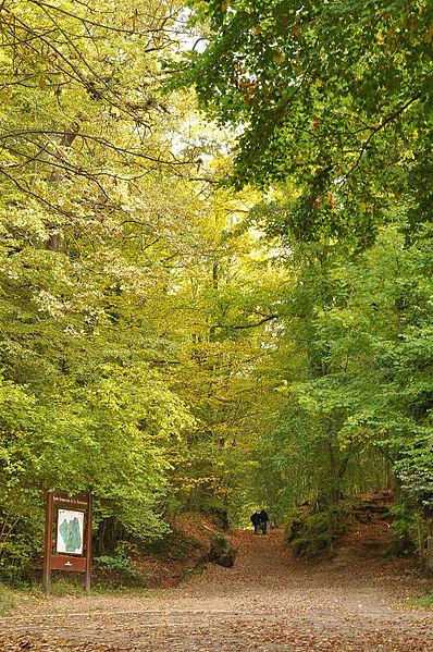 Fichier:Rueil-Malmaison Bois de Saint-Cucufa en automne 010.JPG