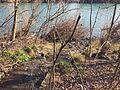 Ruisseau du Molliet - Neyron - janvier 2016 (3).JPG