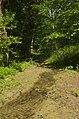 Ruscello - panoramio.jpg