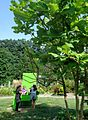 Rutgers Gardens photos of plants and foliage 17.jpg