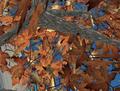 SL - feuillage virtuel -2.png