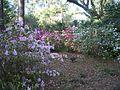 SR Beach Eden Gardens SP flwrs04.jpg