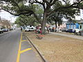 SRoch Street Neutral Ground.JPG