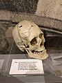 STAM - FGP Gent - PJF Gand - Musée du crime - Museum van de misdaad - police judiciaire - gerechtelijke politie 19.jpg