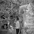 Safad (Safed) Rabbi Jozef van Bennea bij een oude vijgenboom, Bestanddeelnr 255-4026.jpg
