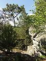 Saint-Pierre-lès-Nemours (77), le Mont Sarrasin par le GR 13, sens est-ouest 21.JPG