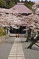 Sakura zentyouji - panoramio - takacchi.jpg