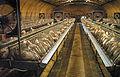 Salle de gavage pour canards destinés à l'industrie du foie gras, équipée en cages individuelles - Sud-ouest de la France, 2004.jpeg