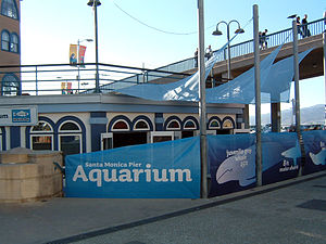 Santa Monica Pier Aquarium - The Santa Monica Pier Aquarium is located beneath the famous Santa Monica Pier.