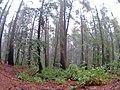 Santa Cruz-Watsonville, CA, CA, USA - panoramio (6).jpg