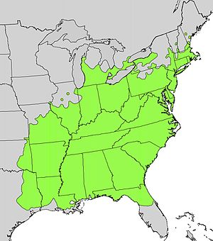 Sassafras albidum - Image: Sassafras albidum range map