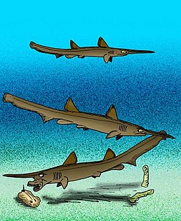 Goblin Shark Facts and Information: Living Goblin Sharks and Their ...