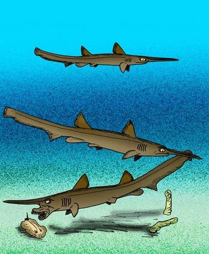 Scapanorhynchus raphiodon