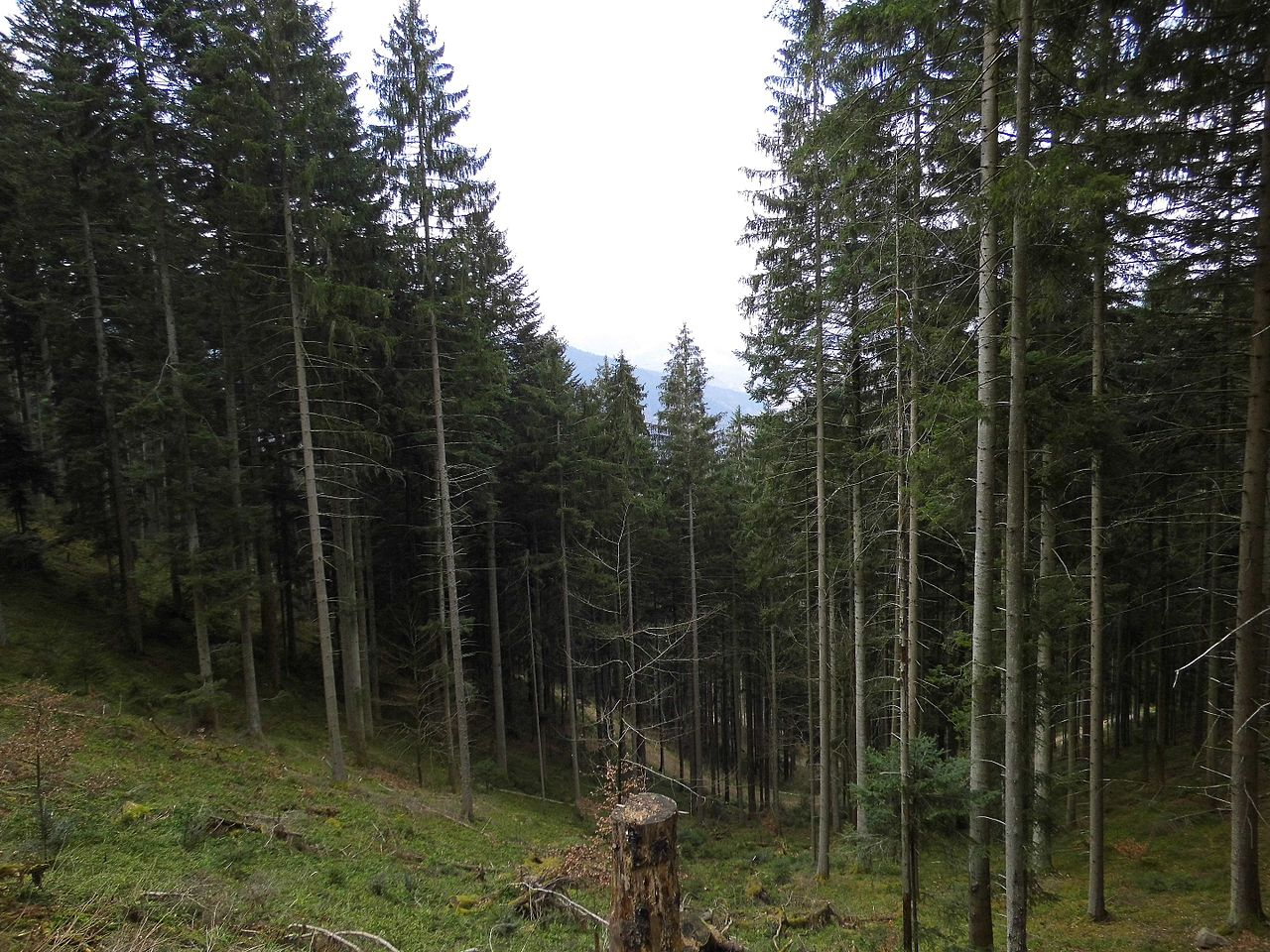 Selva Negra. Baden-Wurtemberg (Alemania). (27063543104).jpg
