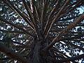 Sequoia-Queenstown.jpg