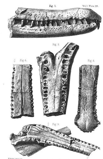 Rhamphosuchus - An 1868 illustration of specimens of R. crassidens (top and center) compared to other crocodylian fossils from the Sewalik Hills