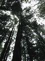 Shei-Pa National Park WANG.GUAN-REN . 002.jpg