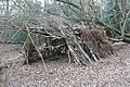 Shelter in the woods - geograph.org.uk - 685016.jpg