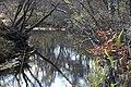 Shoal Creek (5) (5164064819).jpg