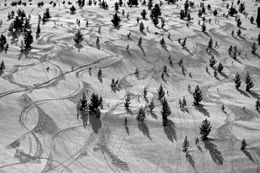 A snowy zone with ski lines describing large curves across coniferous evergreen trees