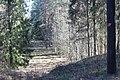 Skogssjön 06.jpg