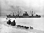 Sled dogs with USS Yancey (AKA-93) in the Antarctic c1947.jpg