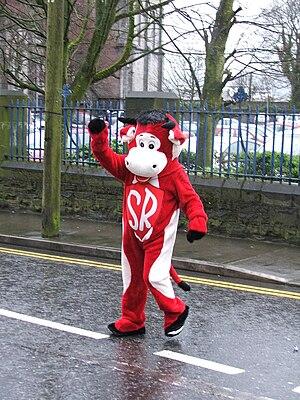 Sligo Rovers F.C. - Benny the Bull, the Sligo Rovers team mascot