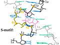 Smotif in RNA suite-labeled.jpg